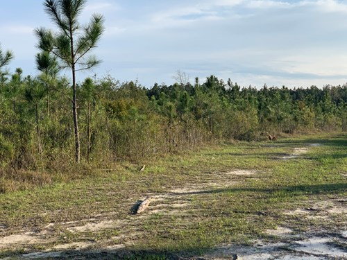 Land For Sale in Walton County, Florida
