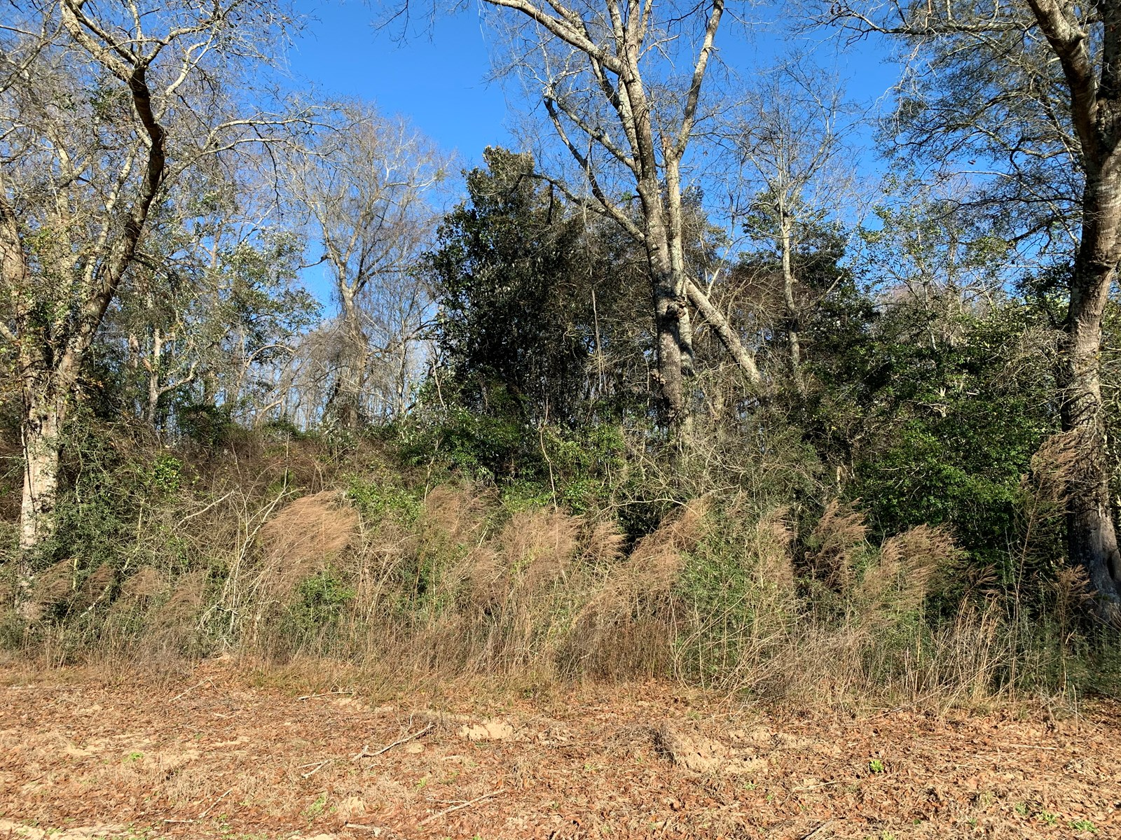 Land For Sale in Geneva County, Alabama