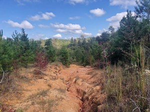 27 ACRES HUNTING TIMBERLAND FOR SALE JEFFERSON DAVIS CO, MS
