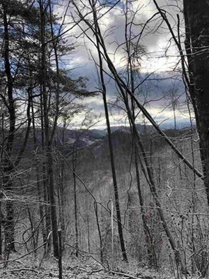 31 ACRES ACRES, UNRESTRICTED MOUNTAIN PROPERTY IN EAST TN