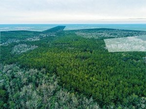 TIMBERLAND FOR SALE IN OKALOOSA COUNTY, FLORIDA