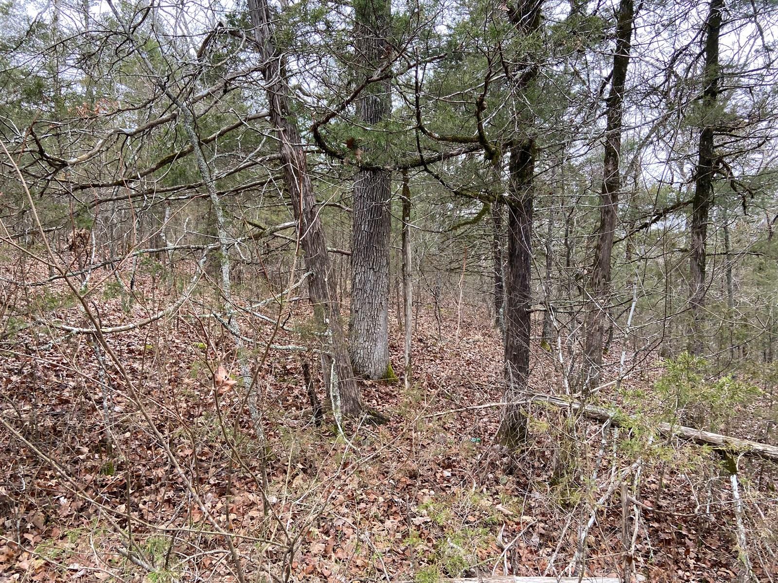 Land in Arkansas for sale, Deer woods, Hunting land in AR