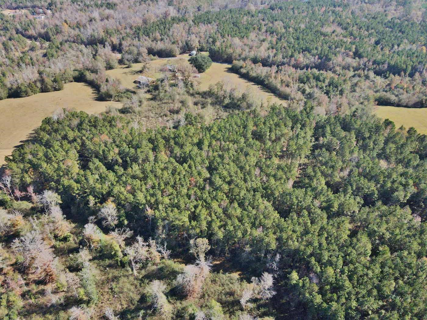 70 Acres Timberland Homesite Lincoln County MS