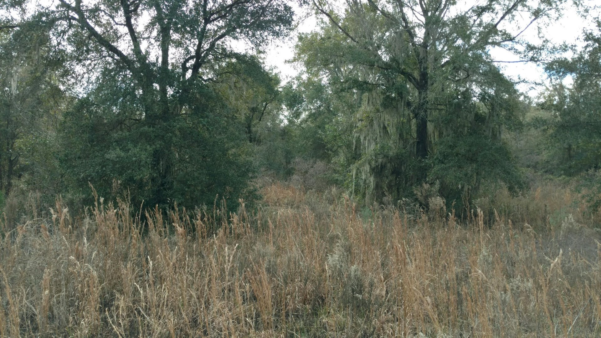 9.83 ACRE LOT FOR SALE IN NORTH CENTRAL FLORIDA