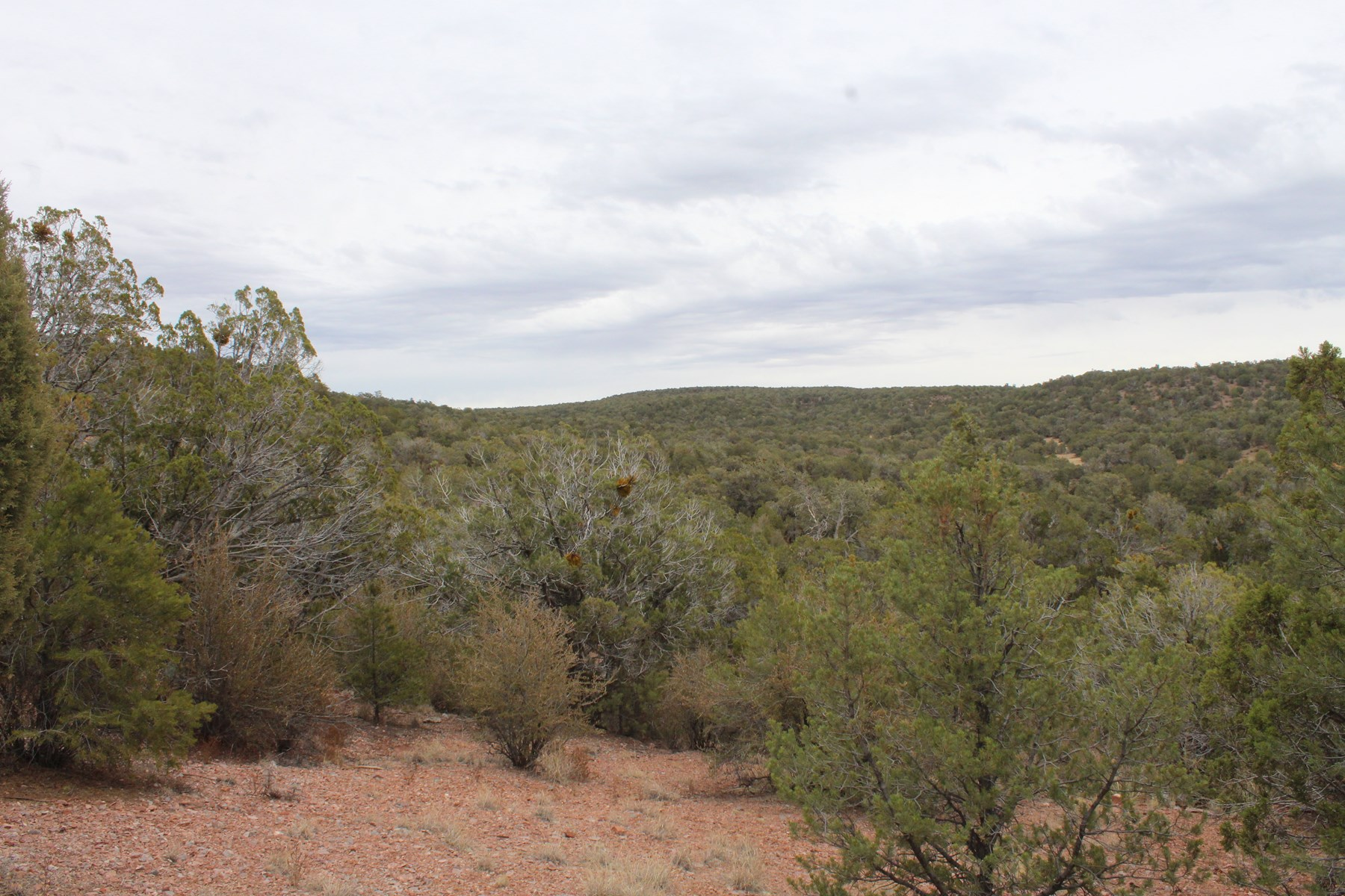 Mountain Camping/Cabin Land for sale Northern AZ No HOA