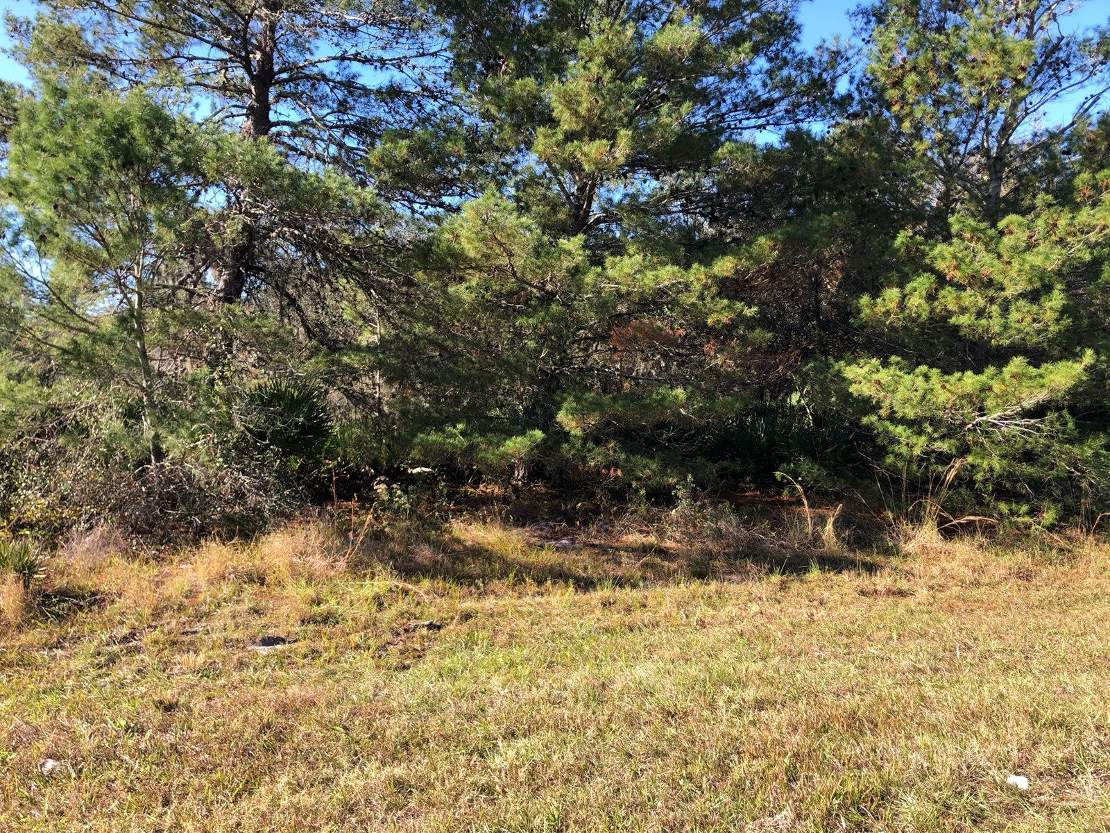 1 ACRE VACANT TRACT, NO HOA, CENTRAL FLORIDA, FROSTPROOF