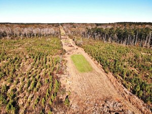58.06 ACRES HUNTING TIMBER LAND FOR SALE NPSD SOUTHWEST MS