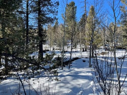 Mountain Property in Divide, Colorado