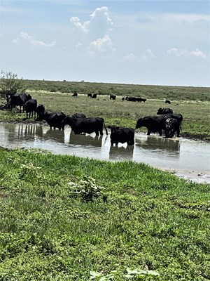 RANCH WITH POTENTIAL OIL INCOME FOR SALE IN SOUTHEAST NM