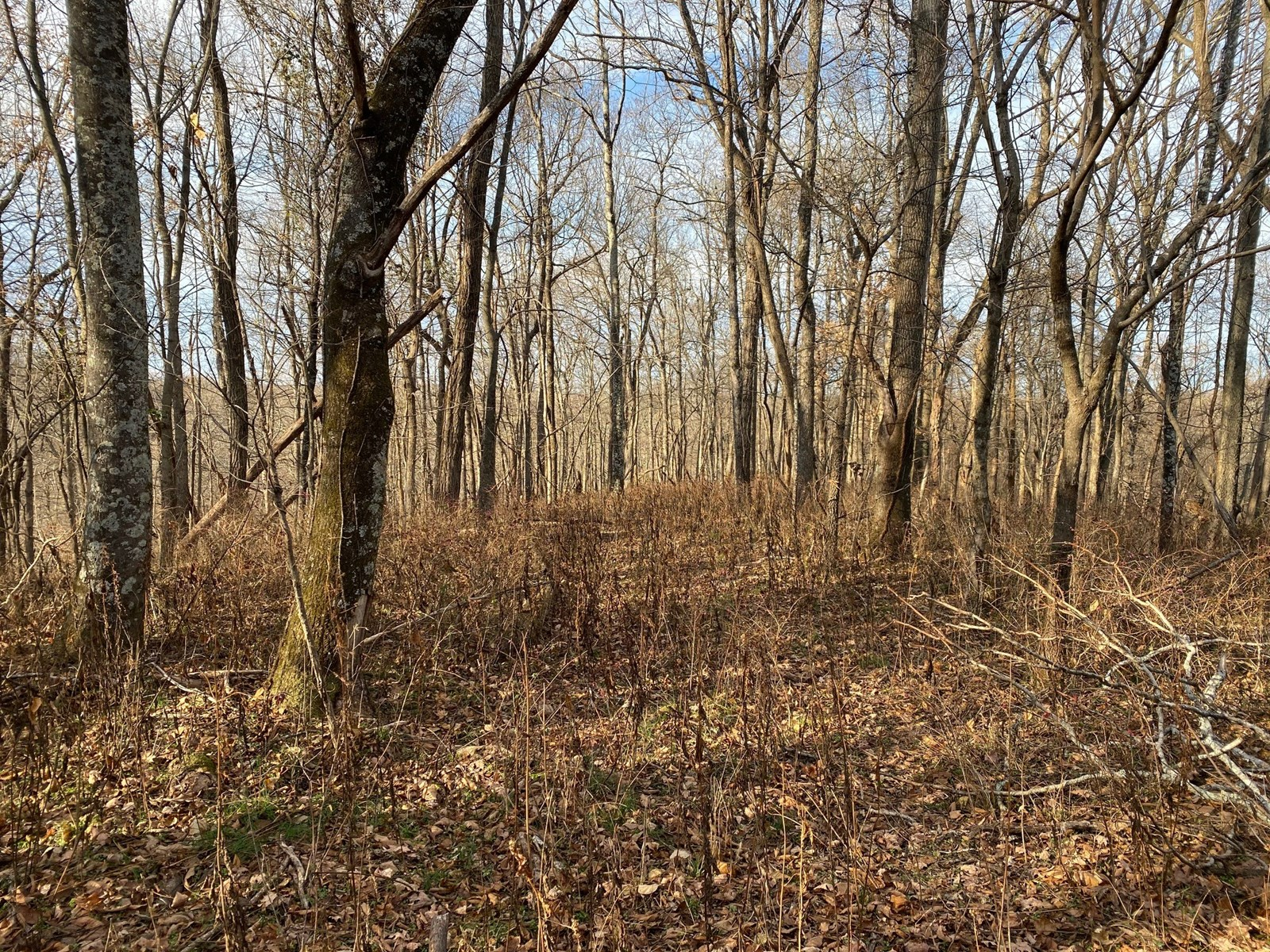 Land for Sale in Columbia TN