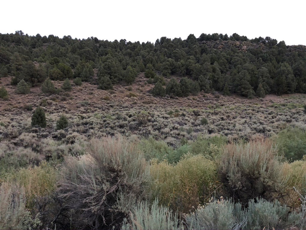 Nevada Virginia City Highlands Residential Buildable Land