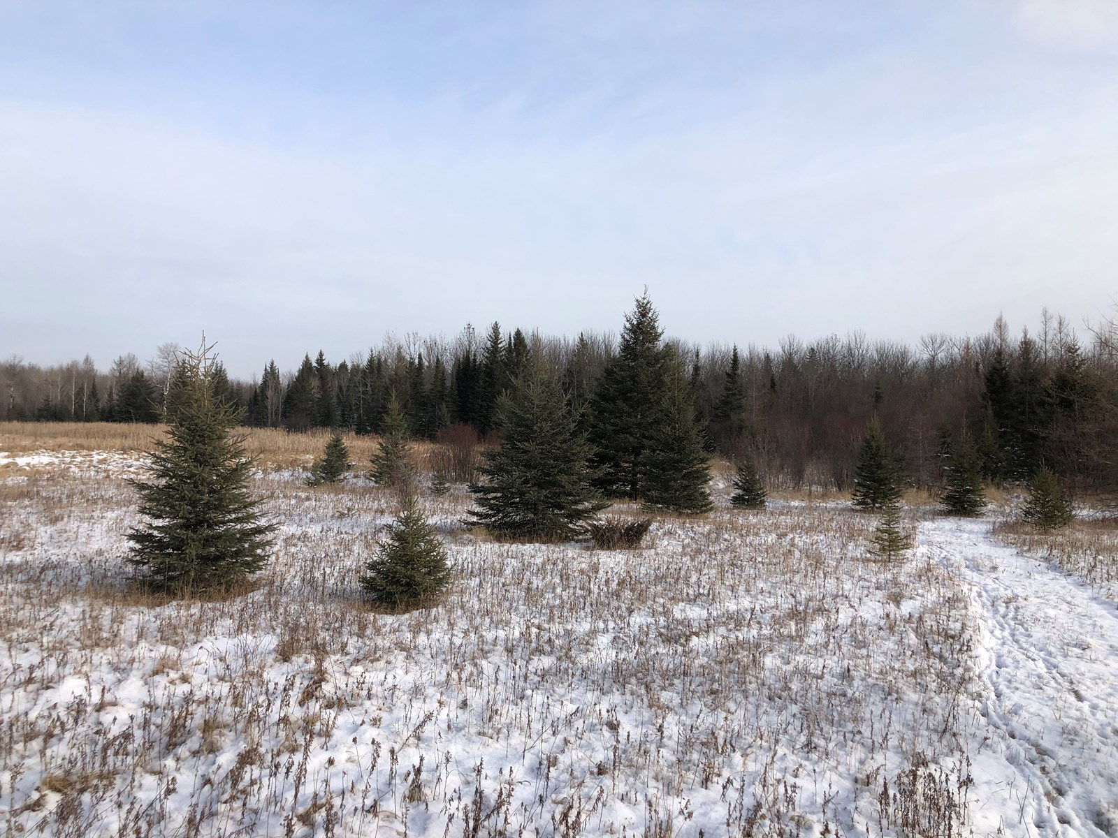 Land for sale in Ray, MN
