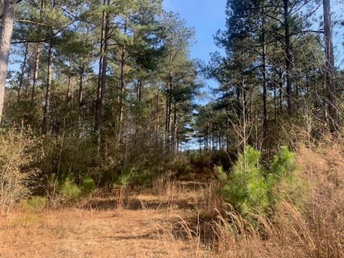 Land For Sale Investment Property Pike County Summit MS