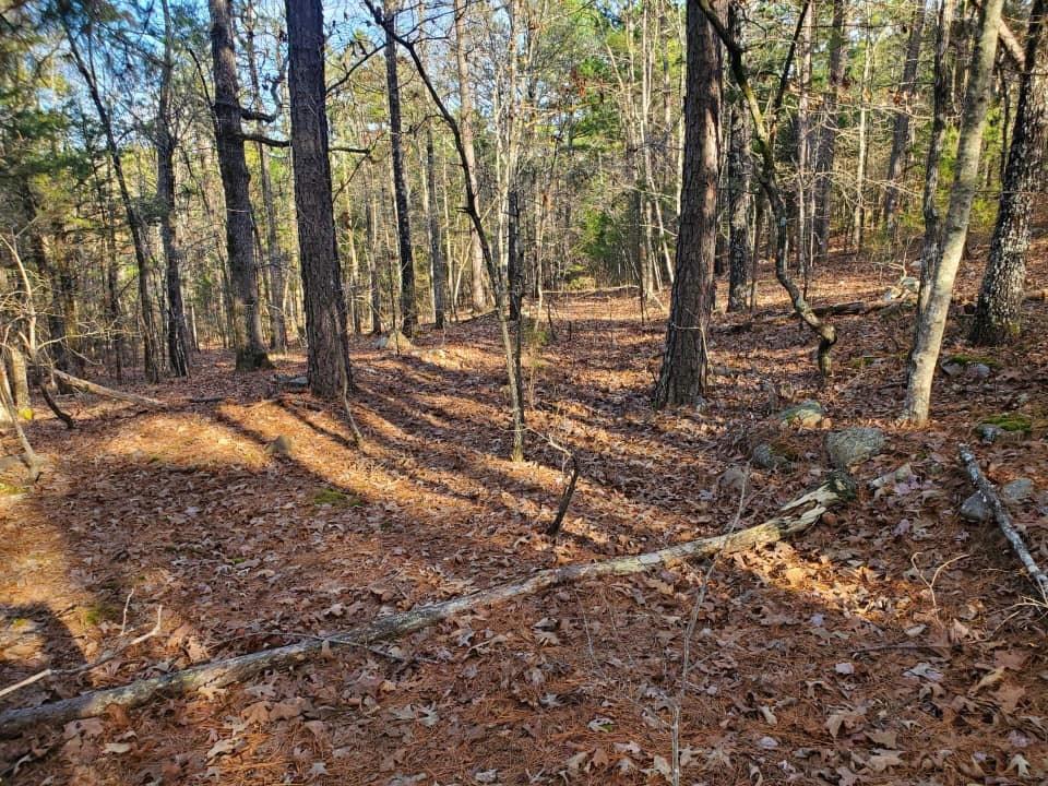 30.01 Acres m/l ., Surveyed! Land only! Adjoins  N.F.!