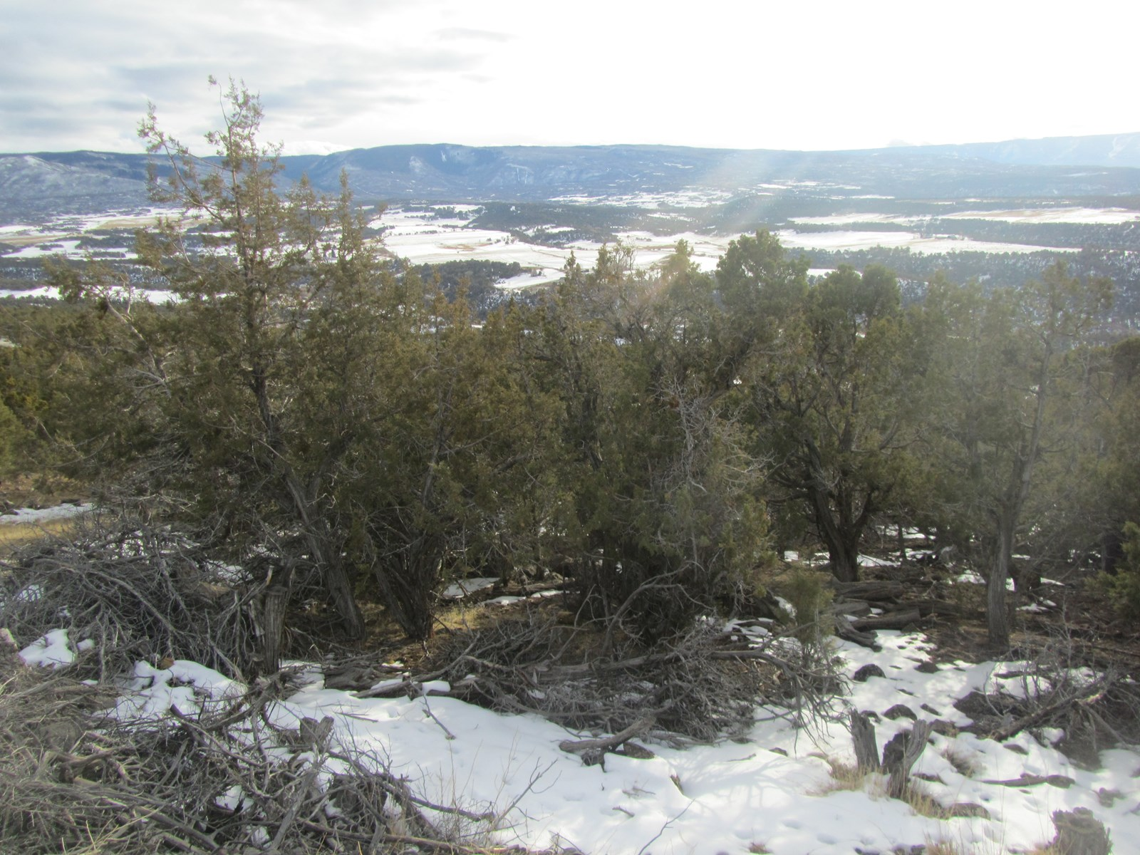 Land Investment Opportunity 3 parcels in Colorado For Sale
