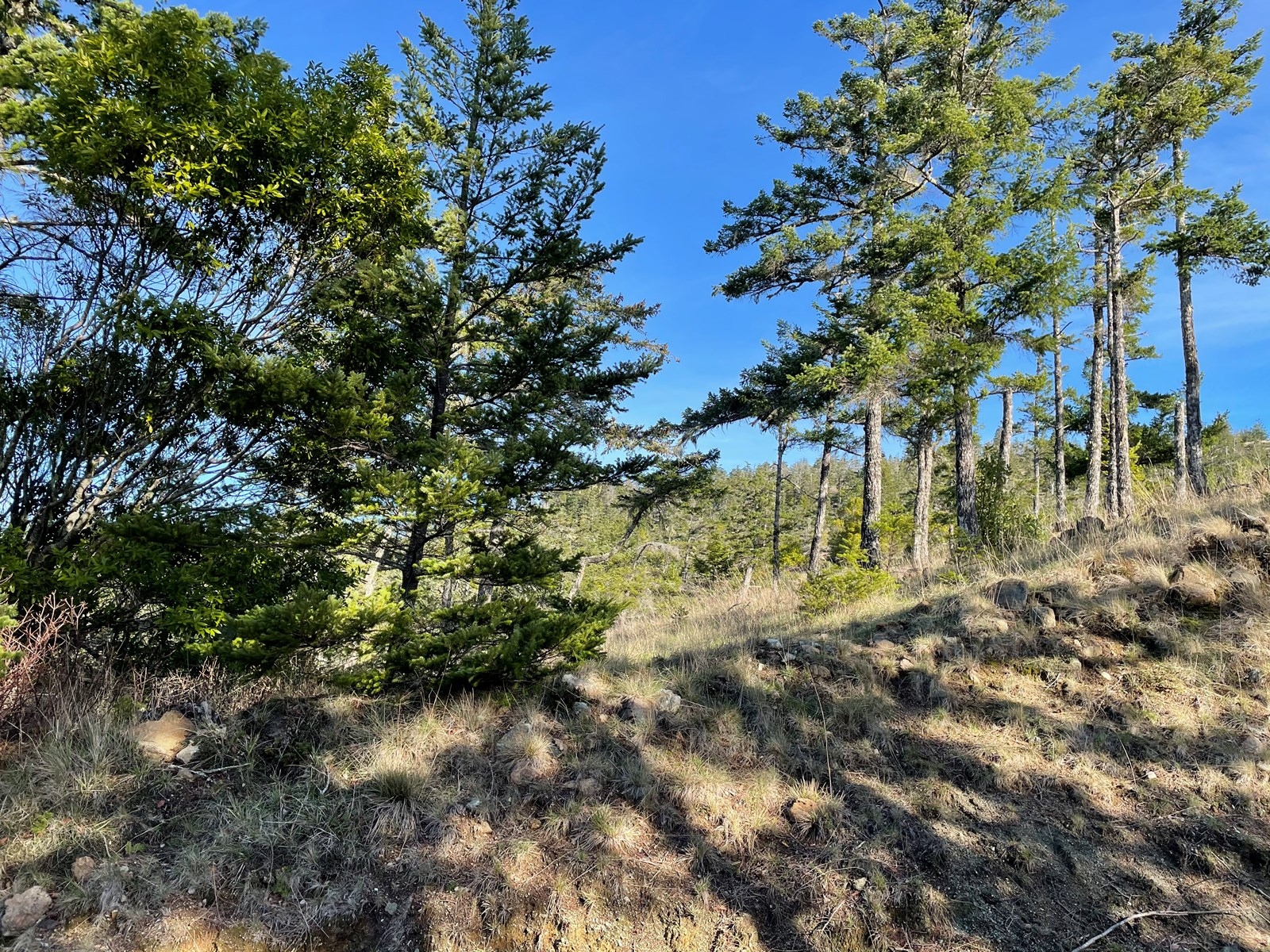 Buildable Land for Sale Gold Beach, OR