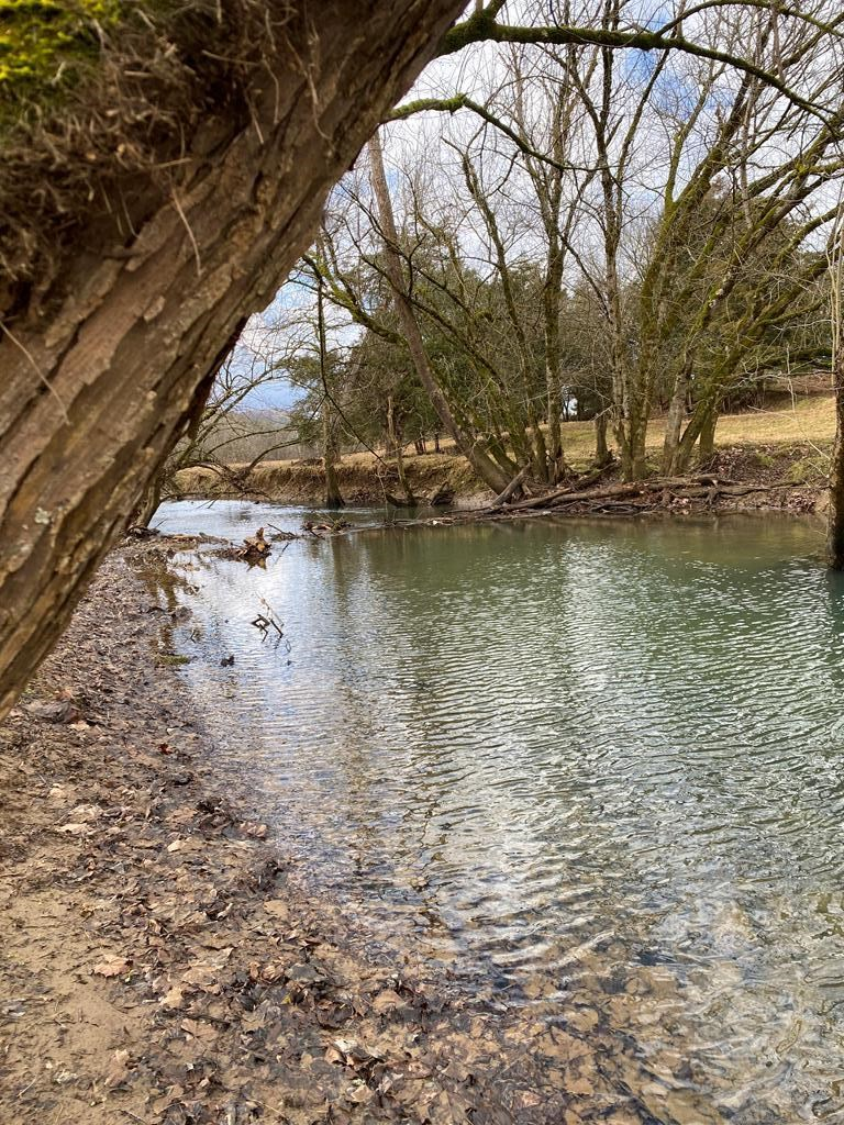 95.98 Acres Unrestricted Land in Rutledge, TN For Sale