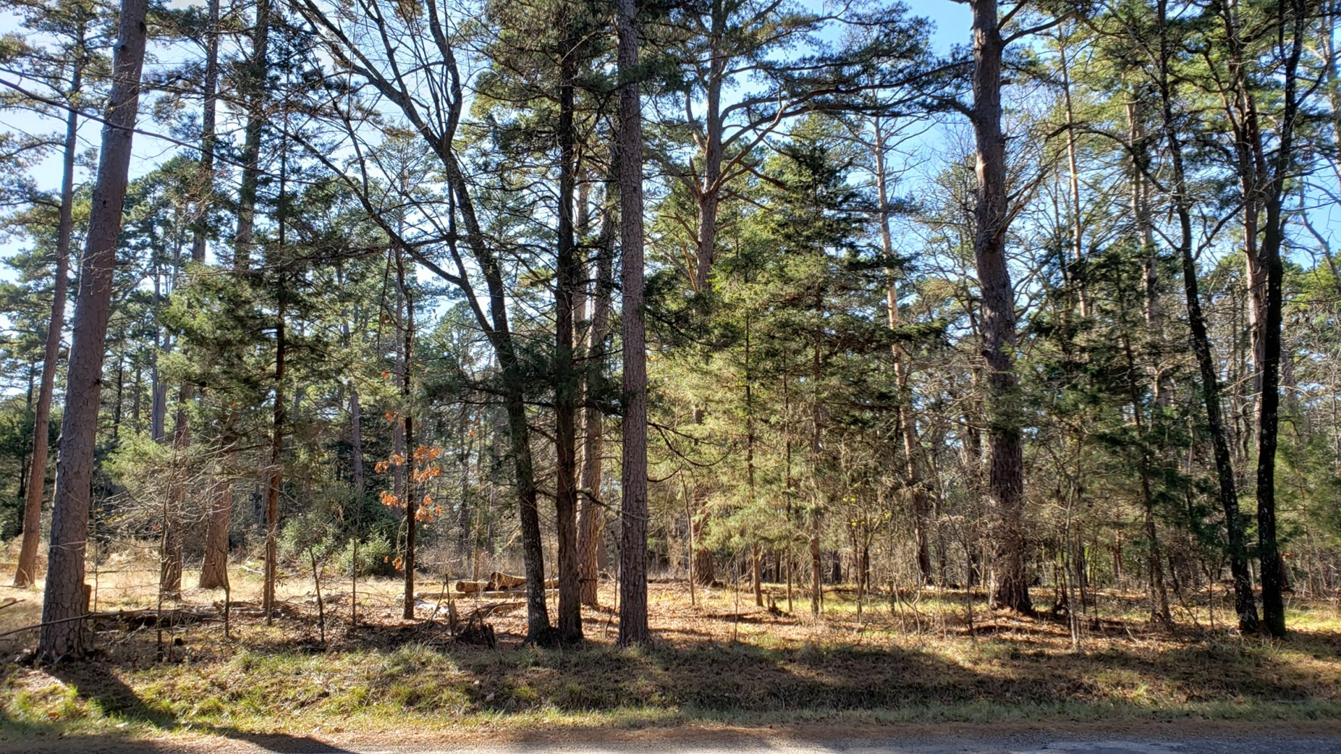 WOODED LOT FOR SALE NEAR GOLF COURSE & LAKE | EAST TX