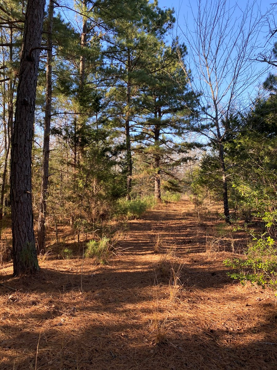 East Texas Land For Sale in Smith County Near Lindale Texas