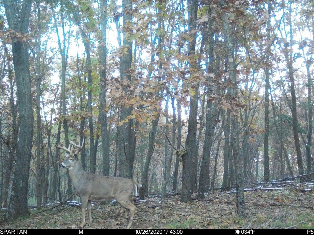 Deer Hunting Land in Montello, WI