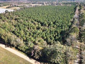 43.64 ACRES TIMBER HUNTING LAND FOR SALE SOUTHWEST MS