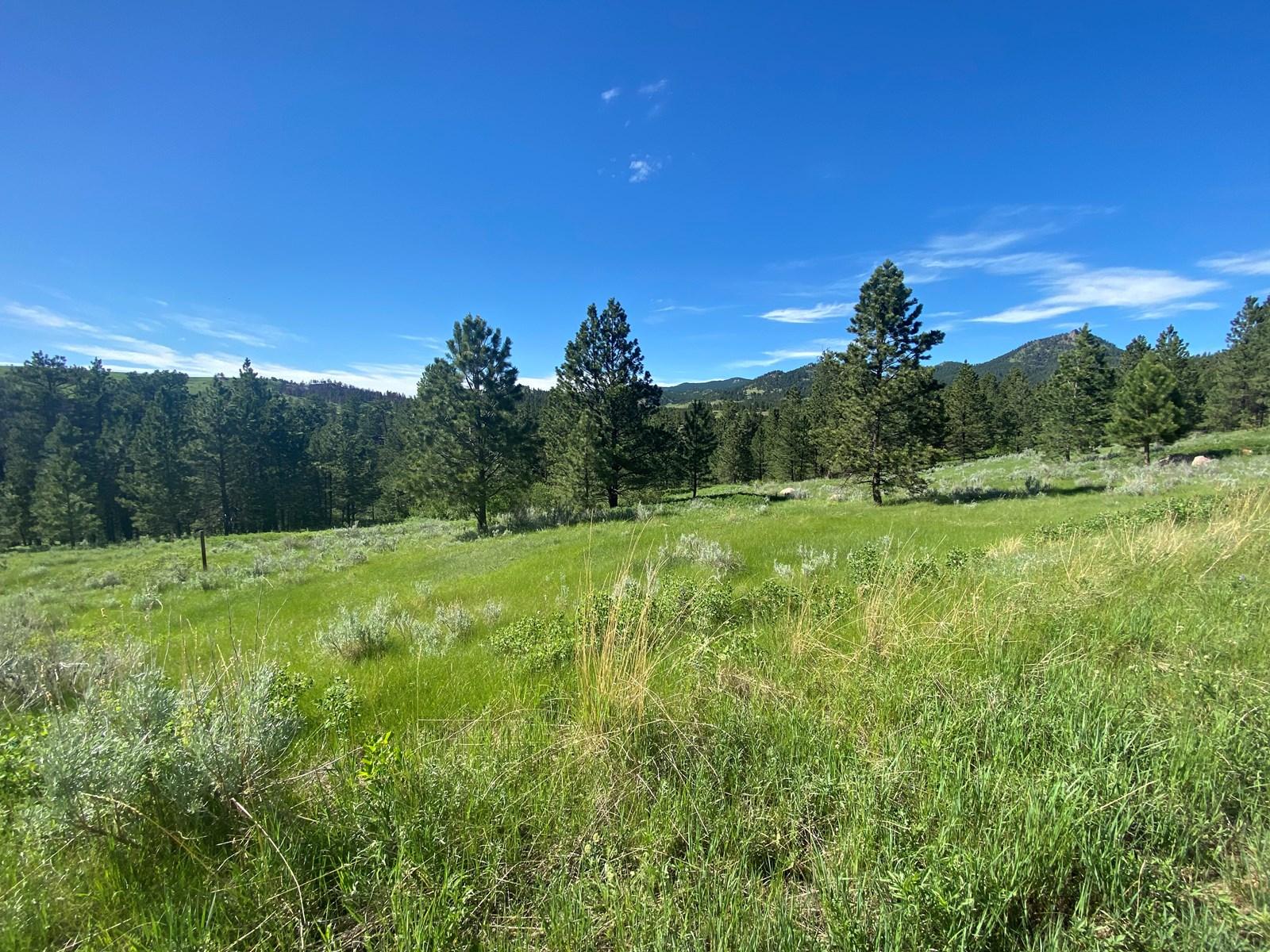 Little Rocky Mountains Acreage/Lot #24 For Sale Landusky, MT