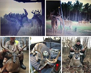 PREMIER HIGH FENCE HUNTING PROPERTY - WHITNEY RANCH, SW MS