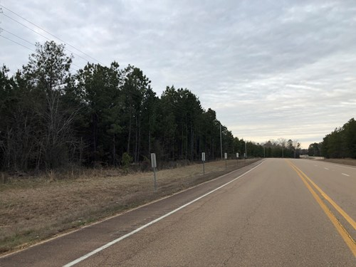 Recreational Pine Timberland near Hermitage, AR for Sale