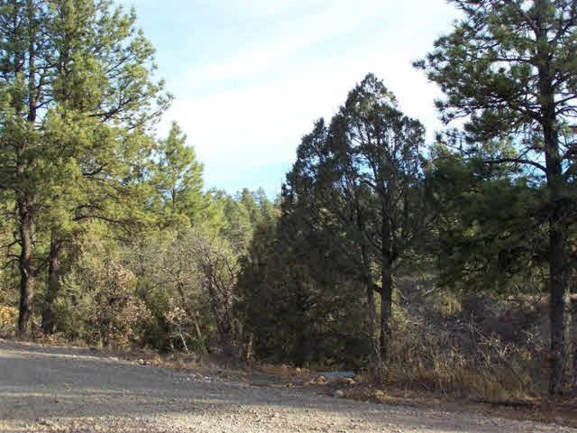 Land for Sale Real Estate Near Heron Lake Northern NM