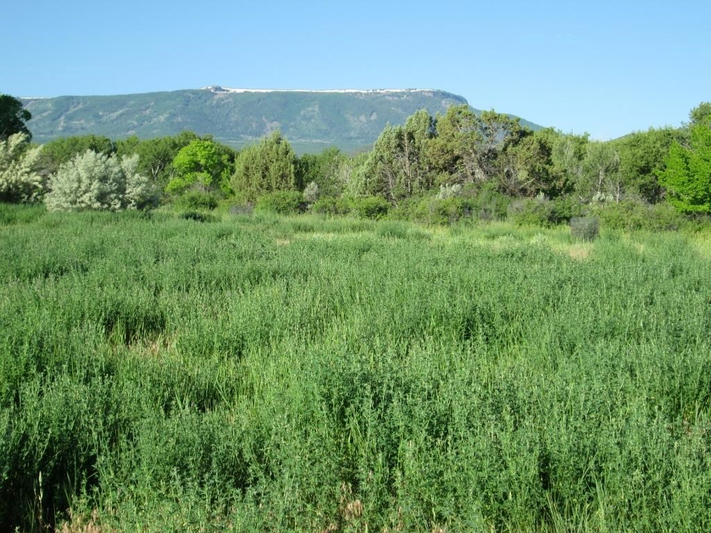 Vacant Lot For Sale in Colorado