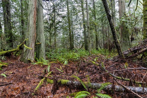 Land for sale in Poulsbo Washington