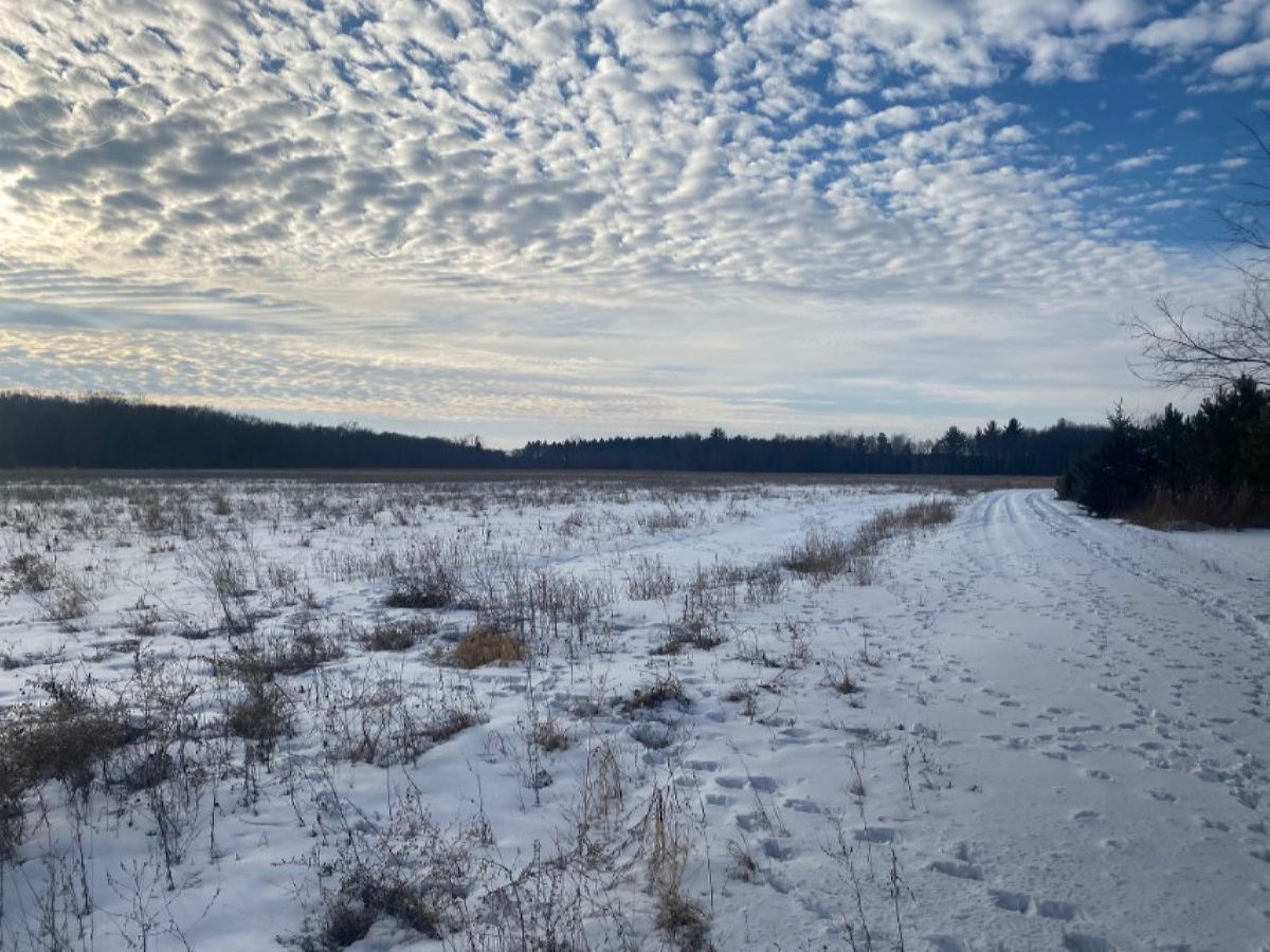 Columbia County WI Tillable Land for sale in the Township of