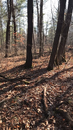HUNTING LAND FOR SALE IN MICHIGAN, LAND FOR SALE IN CLARE CO