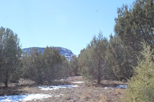 HUNTING CAMP/CAMPSITE, INCLUDES TRAILER, BORDERS PUBLIC LAND