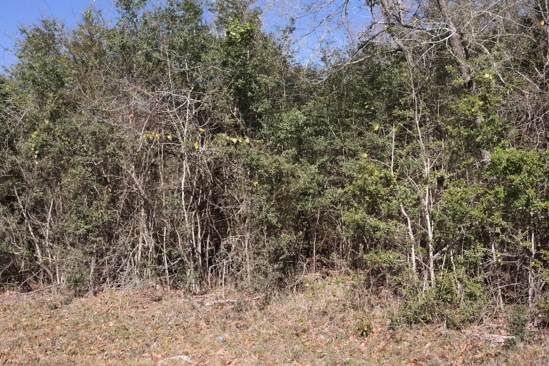 Land for Sale - Montgomery, TX Montgomery County