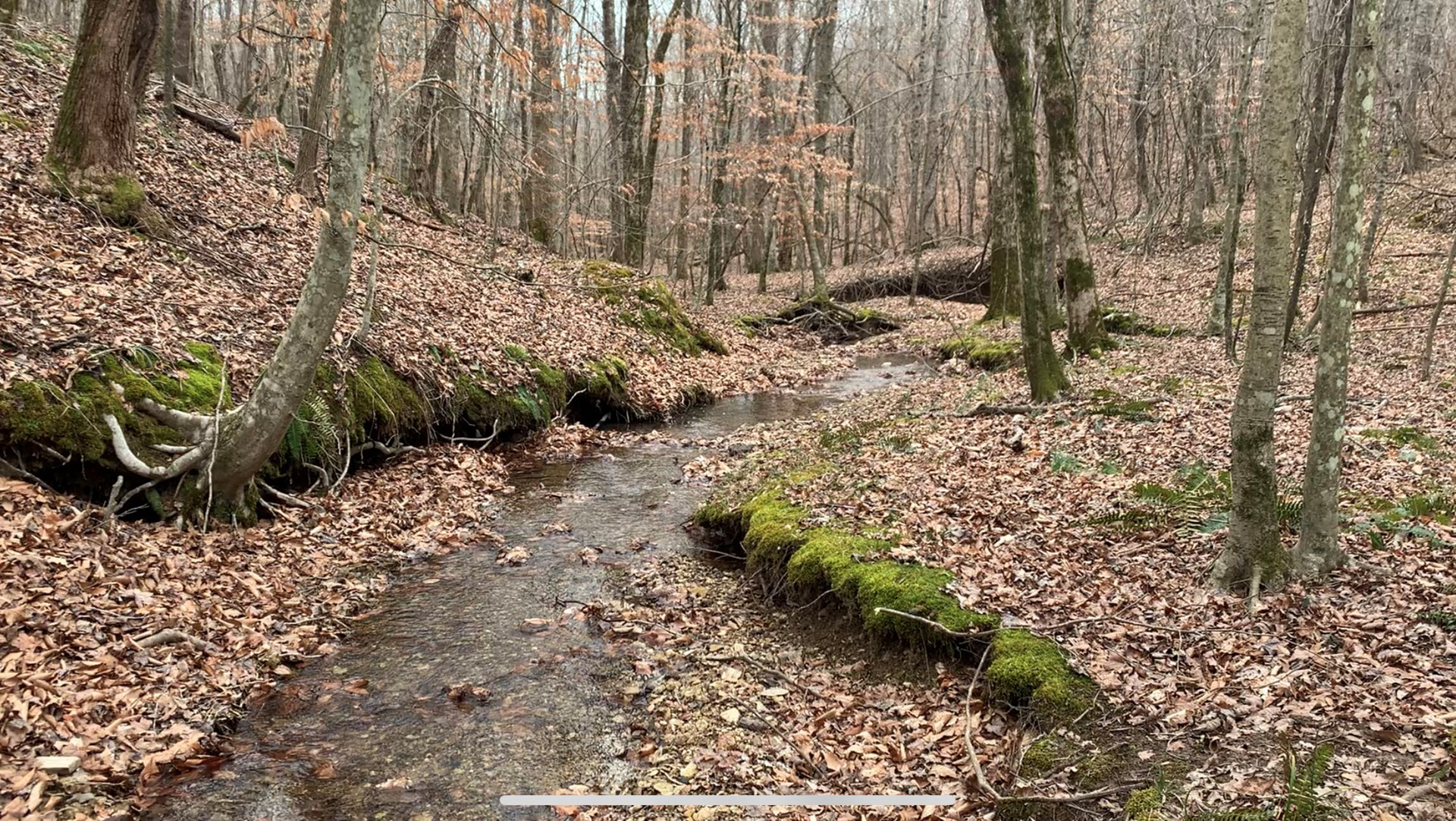 Hunting Land for sale in Iorn City Tennessee