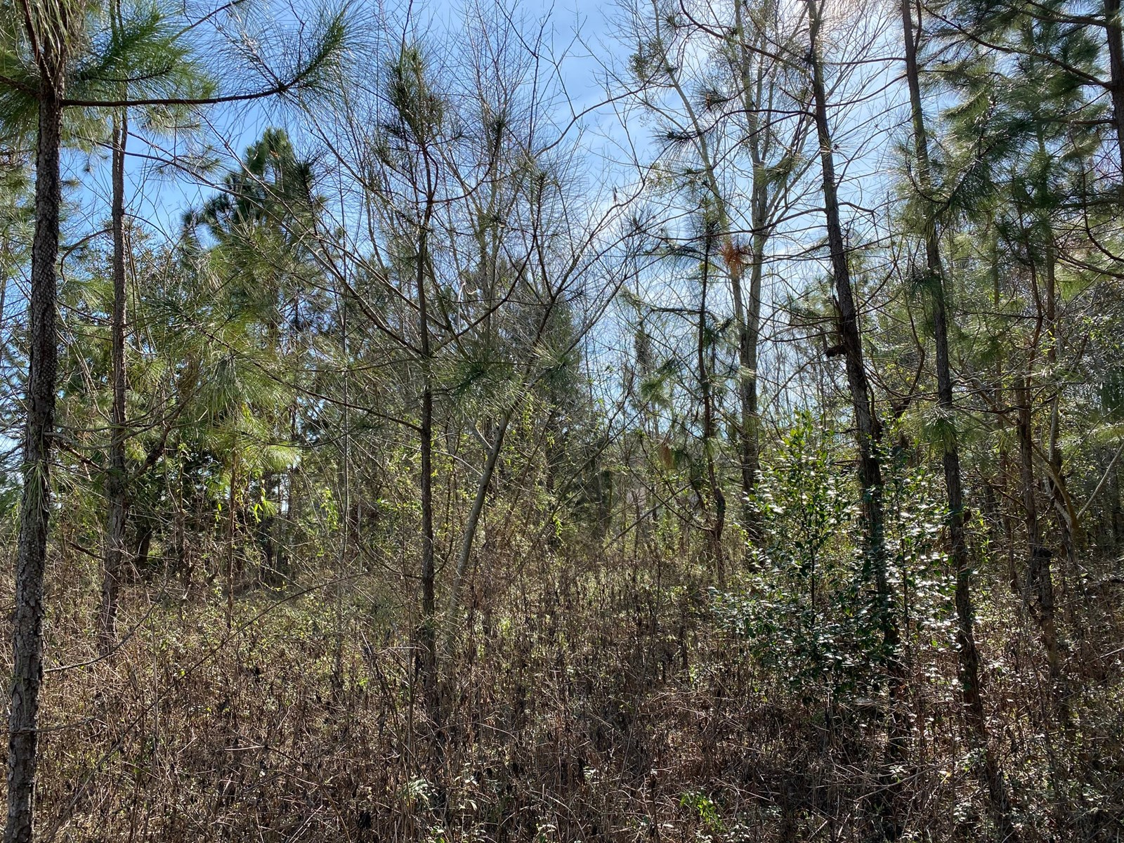 LOT 7 & 8 OF SUWANNEE BREEZE SUBDIVISION
