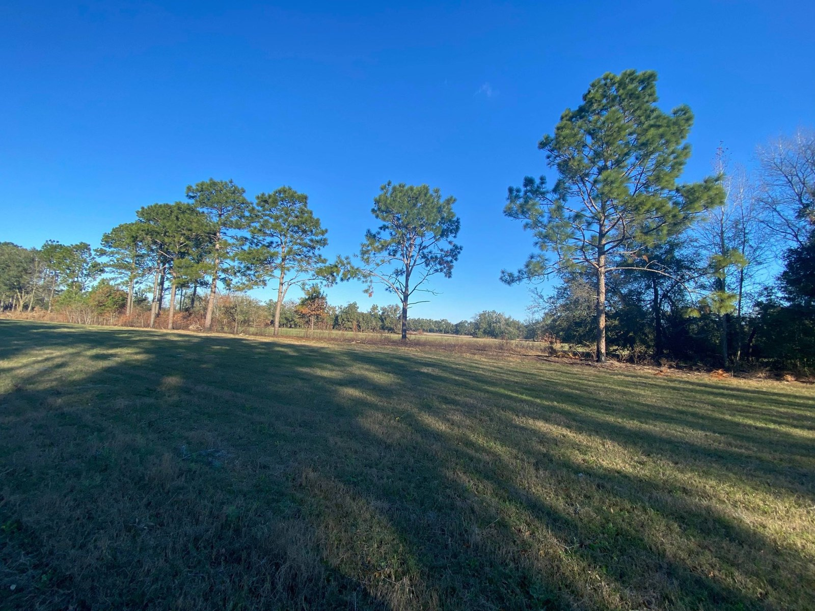 ACREAGE IN BELL FLORIDA!!