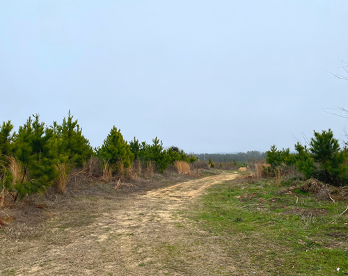 Texas Timberland and Hunting Property for Sale