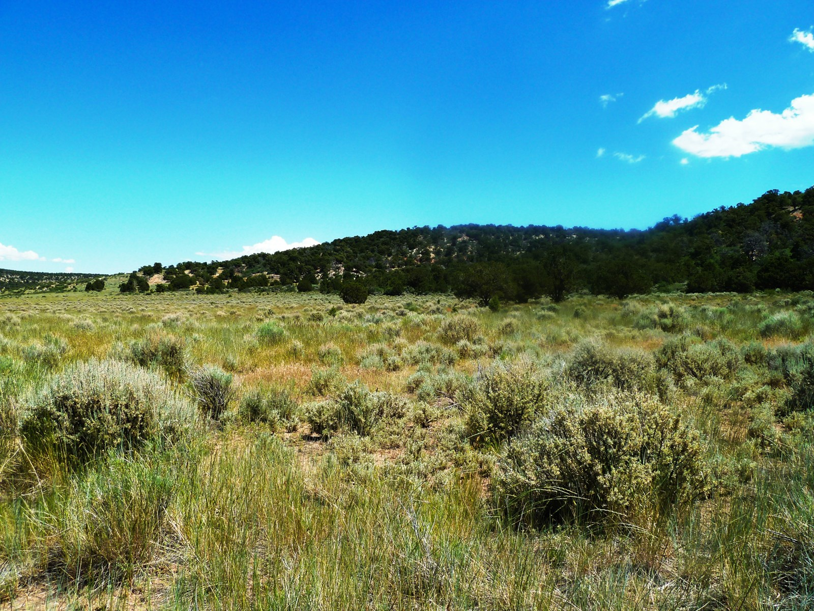 Colorado Recreational Land for Sale