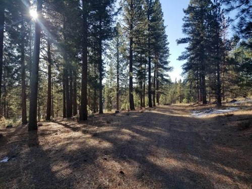 Mountain Retreat/105 Acres/Marketable Timber/Northern, CA