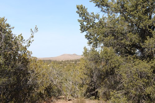 20 Acres with Tall Juniper Pines for Sale Seligman AZ