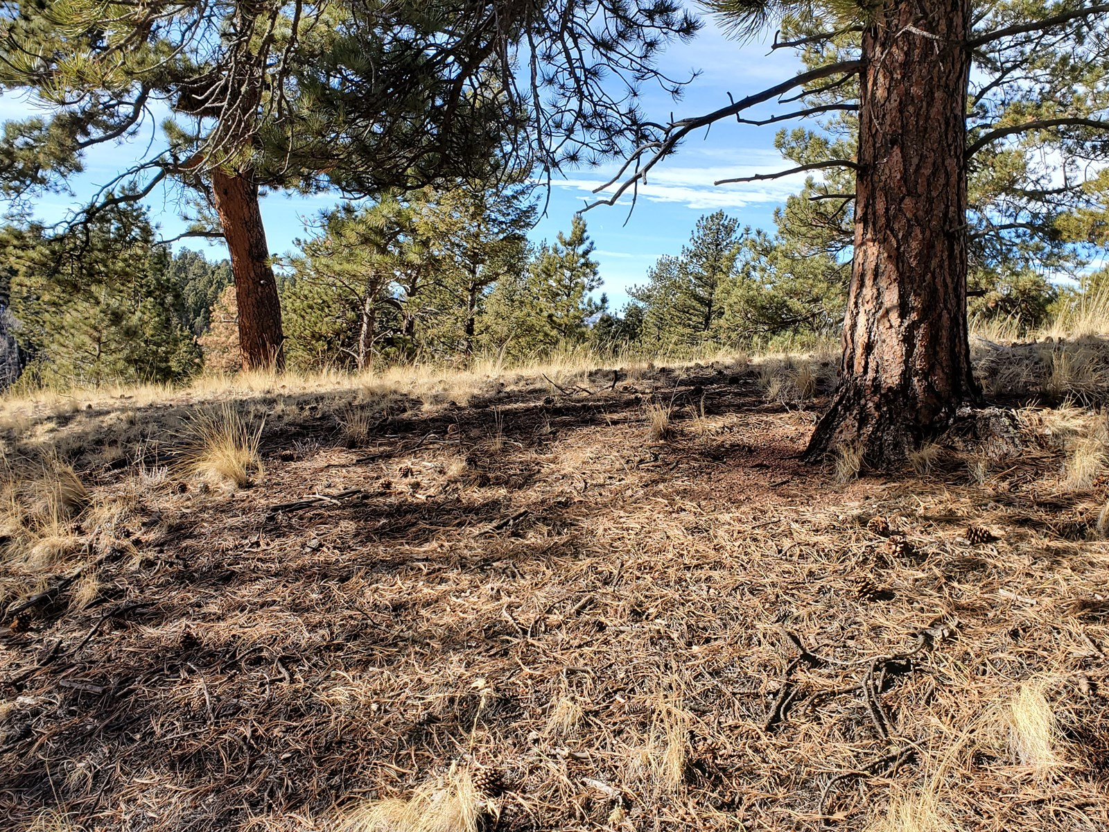 Vacant land Wooded Teller County CO National Forest Hiking F