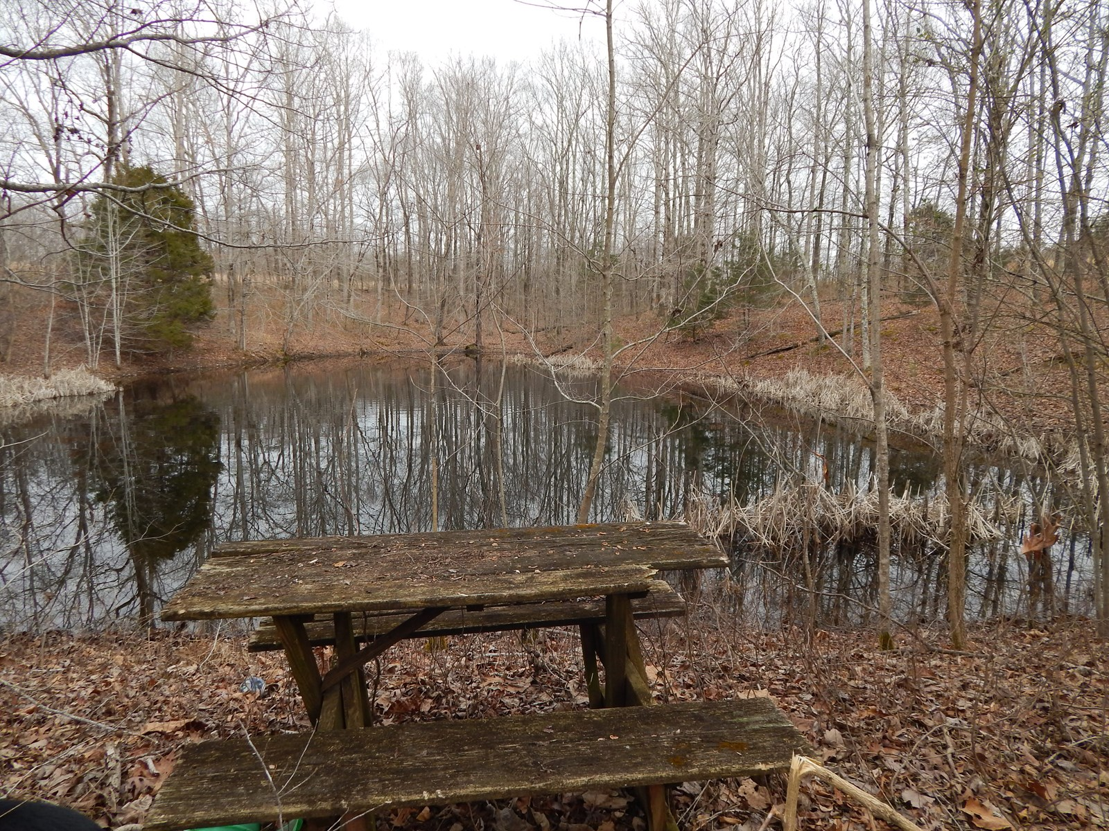 31 ACRES, W/2 PONDS FOR SALE IN ROLLING HILLS OF TENNESSEE!