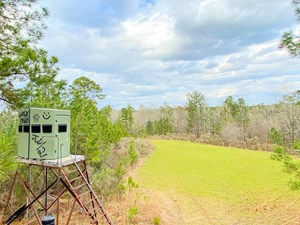 402 ACRE TURNKEY HUNTING TRACT/CAMP FOR SALE ADAMS CO., MS