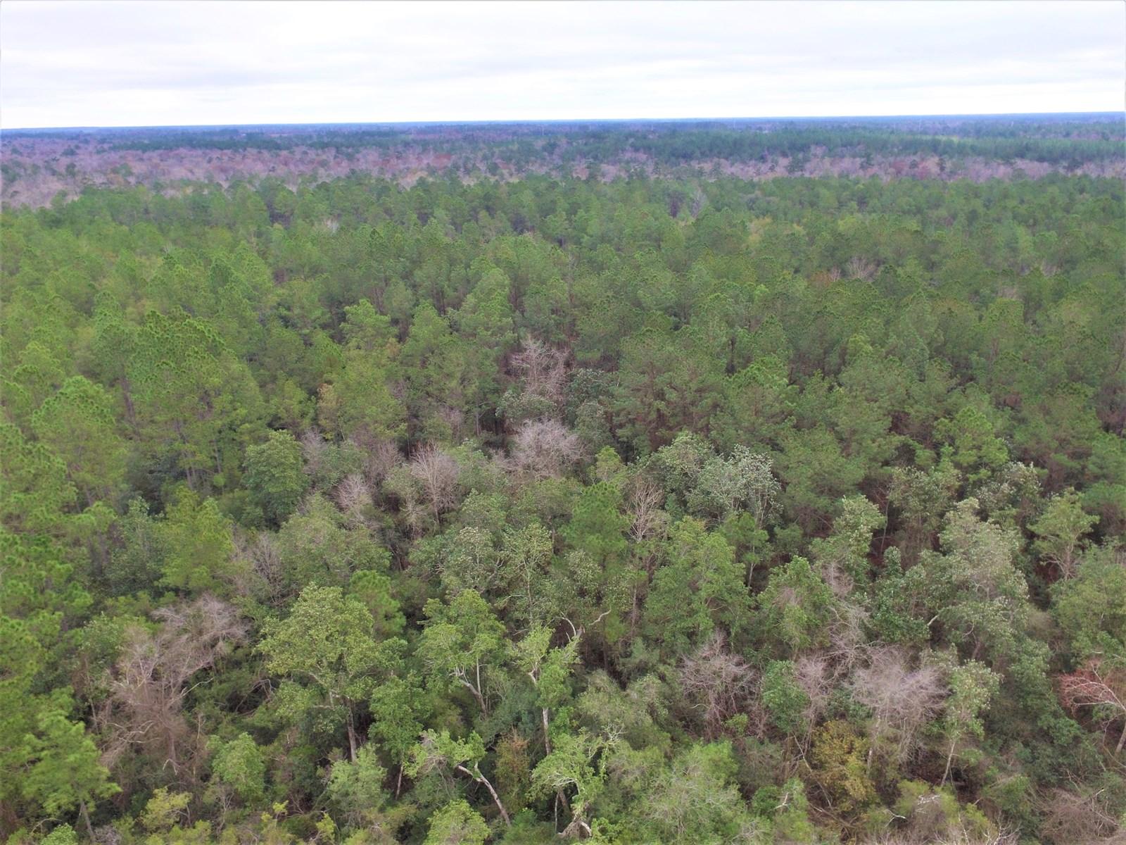 Hosford FL land for sale
