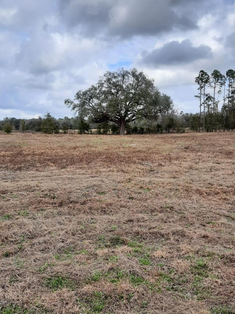 10 ACRES CLEARED WAITING FOR YOUR FOREVER HOME!