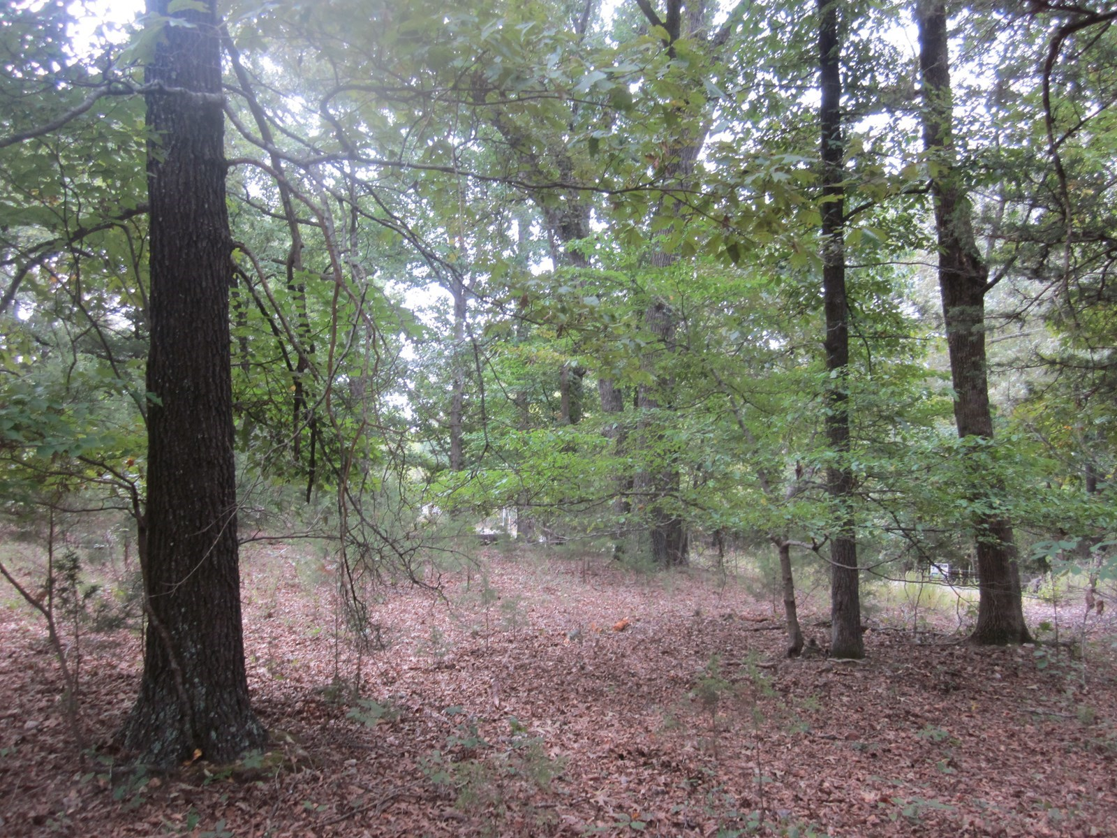Lot for Sale Near White River!