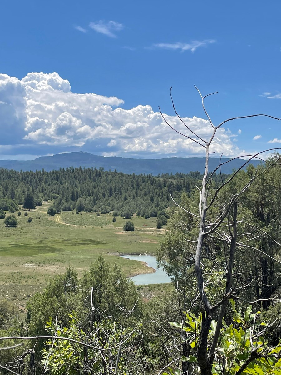 Mountain Land for Sale near Chama NM Ponderosa S/D with view