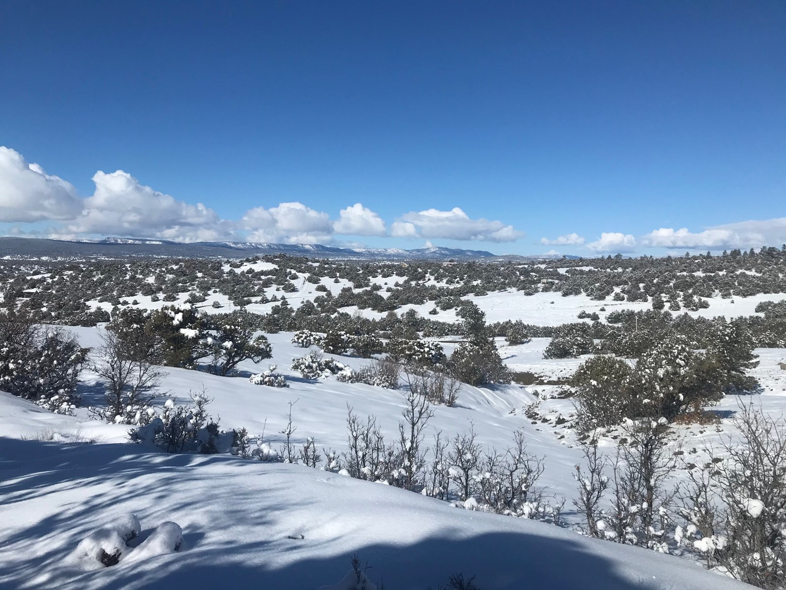 Land for Sale near Chama NM Mountain Property with Views